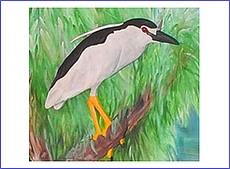 Najväčšie amatérske vtáky